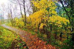 φωτεινά χρώματα φθινοπώρο&upsilo Η φύση της Μόσχας 2017 Στοκ εικόνες με δικαίωμα ελεύθερης χρήσης