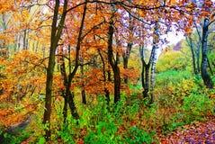 φωτεινά χρώματα φθινοπώρο&upsilo Η φύση της Μόσχας 2017 Στοκ Φωτογραφίες