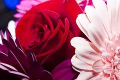 Φωτεινά όμορφα λουλούδια των τριαντάφυλλων και των μαργαριτών στοκ εικόνα
