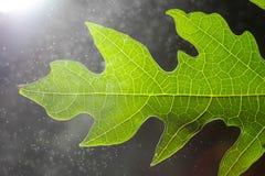 Φωτεινές ίνες φύλλου με το bokeh Στοκ Φωτογραφίες