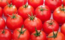 φωτεινές κόκκινες ντομάτ&epsil στοκ φωτογραφία με δικαίωμα ελεύθερης χρήσης