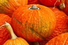 Φωτεινές πορτοκαλιές κολοκύθες Στοκ Εικόνες