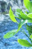 Φωτεινές υγρές φωτεινές υγρές πράσινες εγκαταστάσεις πράσινων εγκαταστάσεων με τον καταρράκτη στο υπόβαθρο στοκ εικόνα με δικαίωμα ελεύθερης χρήσης