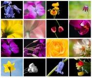 φωτεινή άνοιξη λουλουδ&io Στοκ Εικόνες