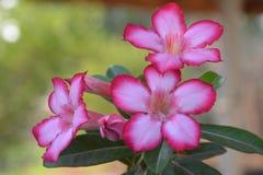 Φωτεινή αναζωογόνηση ομορφιάς χρώματος λουλουδιών φύσης Στοκ εικόνα με δικαίωμα ελεύθερης χρήσης