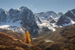 Φωτεινή ζωηρόχρωμη κίτρινη λίμνη βουνών φθινοπώρου, Ρωσία, Σιβηρία, βουνά Altai, κορυφογραμμή Chuya στοκ φωτογραφίες με δικαίωμα ελεύθερης χρήσης
