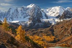 Φωτεινή ζωηρόχρωμη κίτρινη λίμνη βουνών φθινοπώρου, Ρωσία, Σιβηρία, βουνά Altai, κορυφογραμμή Chuya στοκ εικόνα
