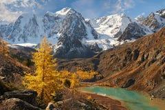 Φωτεινή ζωηρόχρωμη κίτρινη λίμνη βουνών φθινοπώρου, Ρωσία, Σιβηρία, βουνά Altai, κορυφογραμμή Chuya στοκ φωτογραφία με δικαίωμα ελεύθερης χρήσης