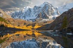 Φωτεινή ζωηρόχρωμη κίτρινη λίμνη βουνών φθινοπώρου, Ρωσία, Σιβηρία, βουνά Altai, κορυφογραμμή Chuya στοκ εικόνες με δικαίωμα ελεύθερης χρήσης