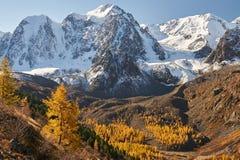 Φωτεινή ζωηρόχρωμη κίτρινη λίμνη βουνών φθινοπώρου, Ρωσία, Σιβηρία, βουνά Altai, κορυφογραμμή Chuya στοκ εικόνες
