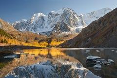 Φωτεινή ζωηρόχρωμη κίτρινη λίμνη βουνών φθινοπώρου, Ρωσία, Σιβηρία, βουνά Altai, κορυφογραμμή Chuya στοκ φωτογραφίες