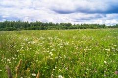 Φωτεινή θερινή ημέρα στο ανθισμένο camomile λιβάδι Στοκ φωτογραφίες με δικαίωμα ελεύθερης χρήσης