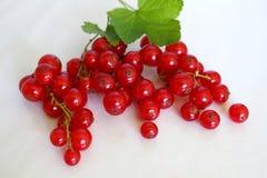Φωτεινή κόκκινη δέσμη των κόκκινων σταφίδων και ορεκτικός με τα πράσινα φύλλα του στο άσπρο υπόβαθρο στούντιο στοκ εικόνες
