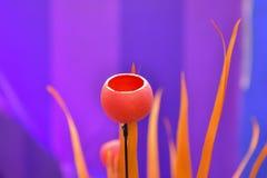 Φωτεινή κόκκινη κινηματογράφηση σε πρώτο πλάνο λουλουδιών στοκ εικόνα