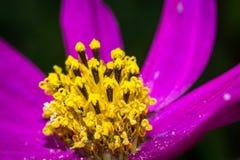 Φωτεινή μακρο φωτογραφία λουλουδιών Στοκ Εικόνες