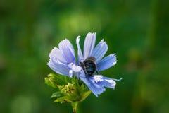 Φωτεινή μακρο φωτογραφία λουλουδιών Στοκ Φωτογραφίες
