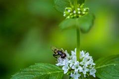 Φωτεινή μακρο φωτογραφία λουλουδιών Στοκ Εικόνα