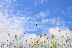 Φωτεινή μπλε ημέρα στοκ εικόνα