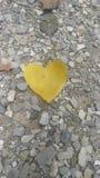 Φωτεινή μόνη καρδιά φύλλων στοκ εικόνες