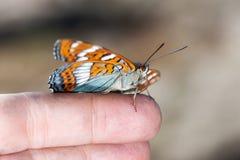 Φωτεινή πεταλούδα σε ένα δάχτυλο στοκ φωτογραφία