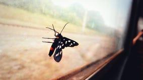 Φωτεινή πεταλούδα στο γυαλί Στοκ εικόνα με δικαίωμα ελεύθερης χρήσης
