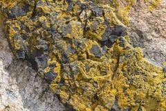 Φωτεινή πορτοκαλιά λειχήνα στο βράχο Στοκ Φωτογραφίες
