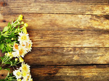 Φωτεινή προοπτική λουλουδιών convolvulus σύνθεσης ανασκόπησης λευκό τουλιπών λουλουδιών Φθινόπωρο Στοκ Φωτογραφία