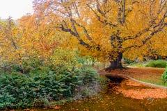 φωτεινή πτώση χρωμάτων Δέντρα κοντά πεσμένα στα λίμνη φύλλα στο νερό Στοκ φωτογραφία με δικαίωμα ελεύθερης χρήσης