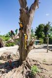 Φωτεινή συνεδρίαση Ara παπαγάλων σε έναν κλάδο δέντρων Στοκ φωτογραφία με δικαίωμα ελεύθερης χρήσης