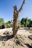 Φωτεινή συνεδρίαση Ara παπαγάλων σε έναν κλάδο δέντρων Στοκ εικόνες με δικαίωμα ελεύθερης χρήσης