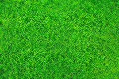 φωτεινή χλόη πράσινη Στοκ εικόνες με δικαίωμα ελεύθερης χρήσης
