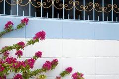 Φωτεινοί ρόδινοι κλάδοι με τα λουλούδια σε έναν μπλε και άσπρο διακοσμητικό τοίχο Στοκ Εικόνες