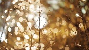 Φωτεινοί σηματοδότες νύχτας Defocused φιλμ μικρού μήκους