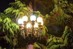Φωτεινοί φωτεινός σηματοδότης και πεύκο τη νύχτα στοκ φωτογραφία