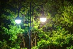 Φωτεινοί φωτεινός σηματοδότης και σφένδαμνος τη νύχτα στοκ φωτογραφία με δικαίωμα ελεύθερης χρήσης