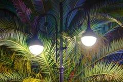 Φωτεινοί φωτεινός σηματοδότης και φοίνικας τη νύχτα στοκ φωτογραφία