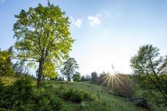 φωτεινός ήλιος Ακτίνες ήλιων στη φύση carpathians Τα βουνά Ο ήλιος στοκ φωτογραφία