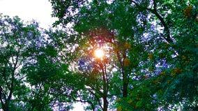 Φωτεινός ήλιος μέσω των δέντρων από κάτω από τον ήλιο που φωτίζει υπέροχα στοκ εικόνες