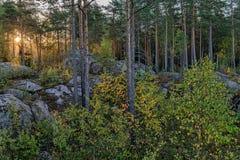 Φωτεινός ήλιος πρωινού Στοκ Εικόνες