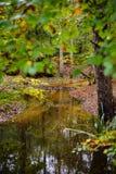 Φωτεινός δασικός ποταμός στην πτώση στοκ φωτογραφίες