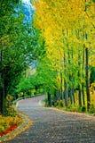 φωτεινός δρόμος τούβλου Στοκ Φωτογραφίες