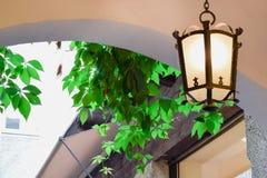 Φωτεινός εκλεκτής ποιότητας λαμπτήρας με τα πράσινα φύλλα στο υπόβαθρο κάτω από το ανώτατο όριο στοκ εικόνα