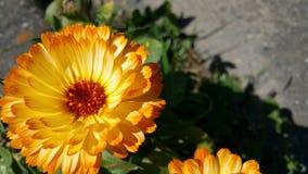 Φωτεινός κίτρινος χρυσός floral ζάλης στοκ εικόνες
