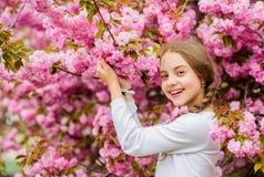 Φωτεινός και δονούμενος Το ροζ είναι η συμπάθειά μου Το μικρό κορίτσι απολαμβάνει την άνοιξη Παιδί στα ρόδινα λουλούδια του υποβά στοκ φωτογραφία