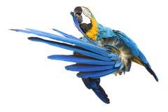 φωτεινός παπαγάλος ara Στοκ εικόνα με δικαίωμα ελεύθερης χρήσης