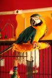Φωτεινός παπαγάλος Στοκ φωτογραφία με δικαίωμα ελεύθερης χρήσης