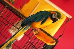 Φωτεινός παπαγάλος Στοκ Εικόνα