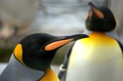Φωτεινός χρωματισμός της Νίκαιας στον προϊστάμενο ενός βασιλιά Penguin Στοκ Εικόνα