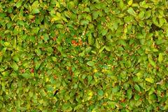φωτεινός floral ανασκόπησης Στοκ Φωτογραφίες
