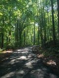φωτεινό δάσος Στοκ Εικόνες